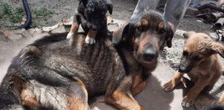 tenencia animales Quito